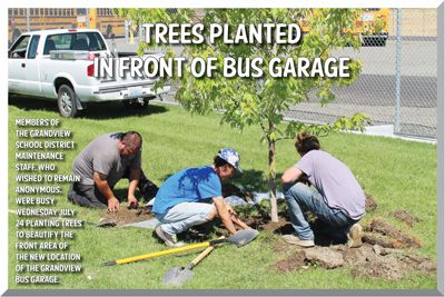 Trees Planted in Front of Bus Garage